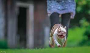 happy puppy on the run