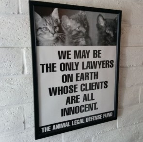the only lawyers on earth