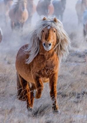 Donald Trump as a Horse
