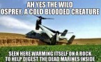cold blooded osprey