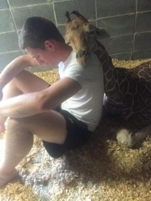giraffe nap