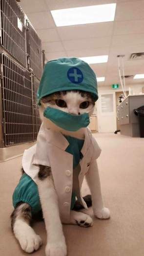 medical cat has your attention