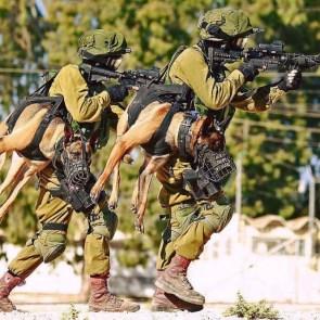 military dog walker