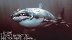 oh senpai shark