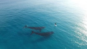 whales with paddle boarder