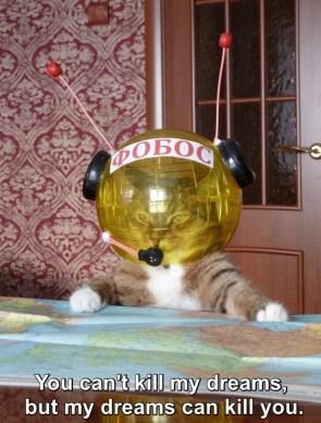 Bond Cat