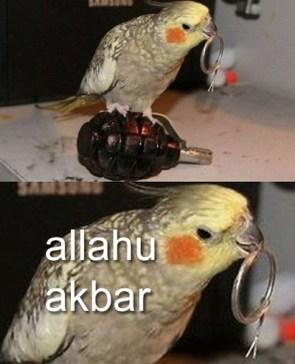 allahu akbar parrot