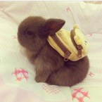 bunny with packpack