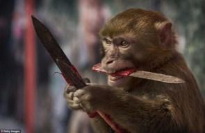 murder monkey