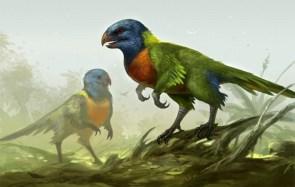 raptor birds