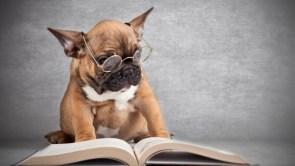 well read pug