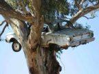 Falcon in a Tree