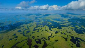 Aerial view of Everglades National park in Florida