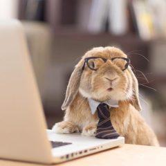 business bunny