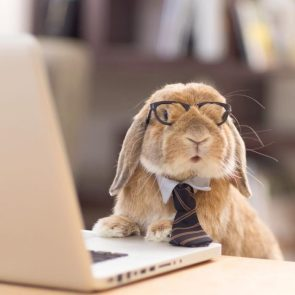 business bunny