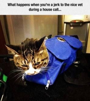 jerk cat