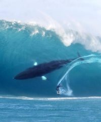 surfing whale