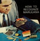How To Recognize Marijuana