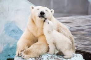 Polar Bear Lovers