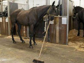 brooming horse