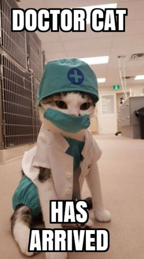 doctor cat has arrived