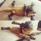 military lizard