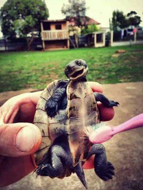 turtle belly rub