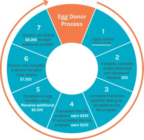 Egg Donor Process