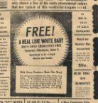 Free live white baby