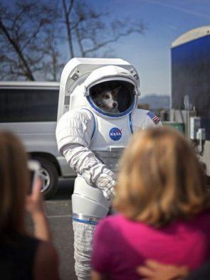 NASA Dog
