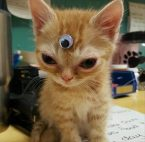 Third Eye Cat