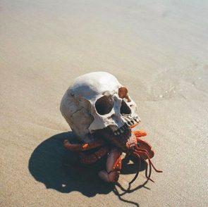 skull crab