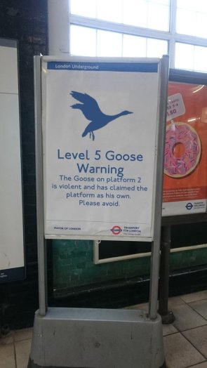 level 5 goose warning