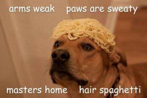 pasta dog rap