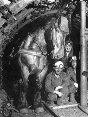underground horse