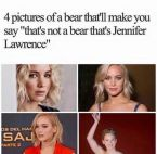 4 pictures of a bear