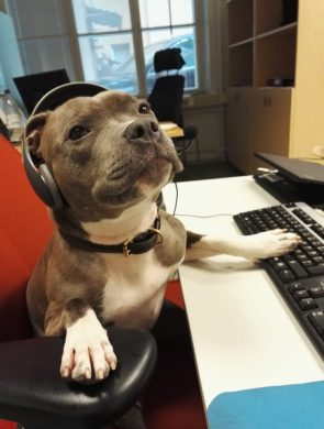 Doggy Tech Support