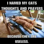 I named my cats thoughts and prayers