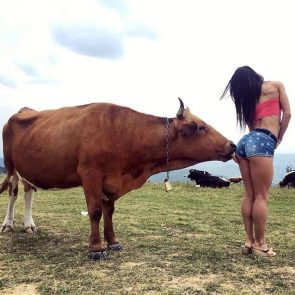 a cow licking a woman's butt