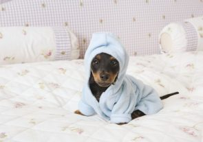 cute dog in a hoodie