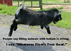 filling animals with helium is wrong