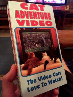 Cat Adventure Video
