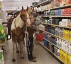 Shopping Horse