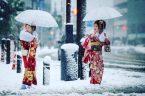 Frozen Umbrellas
