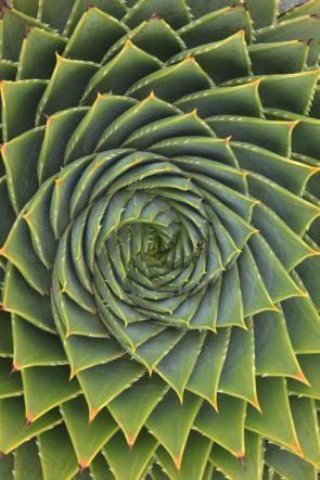 Mathmatical Cactus flower