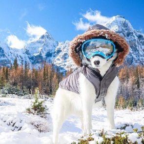 Mountain Snow Dog