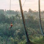 Palm Tree Swing