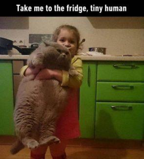 take me to the fridge, tiny human