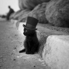 top hat cat