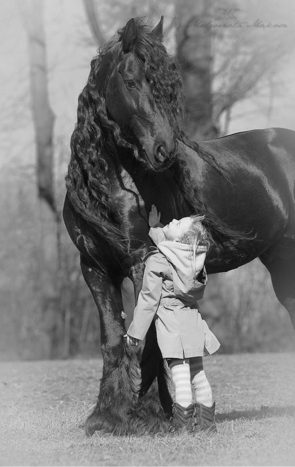 A horse and a girl